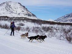 Skijoring with my favorite dogs!