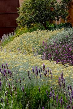 Lovely romantic garden.yellows and purples