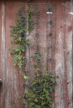 Find new life for an old barn by salvaging the wood. Reclaimed wood is perfect for many uses and lets you preserve a part of history.  www.livingthecountrylife.com