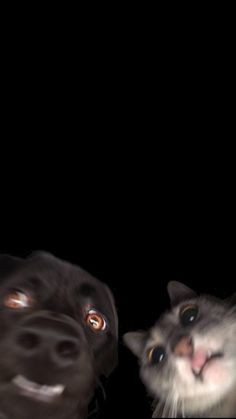 Black Cat Eyes IPhone Wallpaper - IPhone Wallpapers