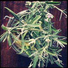 Propagating Lavender via I'm an Outlaw, Not a Hero