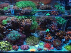 Saltwater Aquarium Beginner, Saltwater Aquarium Fish, Saltwater Tank, Life Pictures, Life Pics, Coral Reef Aquarium, Nano Tank, Blowing Bubbles, Salt And Water