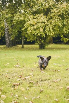 #photographie #photography #animal #dog #chien #teckel #nature #details #vintage #manon #debeurme #photographe #photographer Manon, Nature, Vintage, Dachshund Dog, Photography, Animaux, Naturaleza, Vintage Comics, Nature Illustration