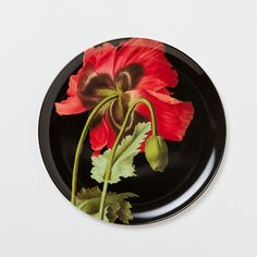 """Referencing the dramatic, botanical illustrations popularized by ladies of leisure in the 18th-century British Isles, this collection of shatterproof melamine tableware calls for an elegant afternoon picnic.- Heavy duty melamine- Dishwasher safe- Do not microwave- Imported11"""" diameter"""