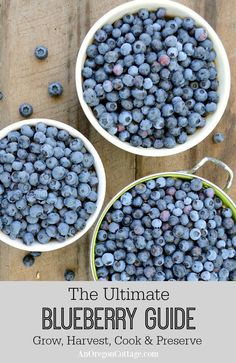 A grow, harvest, and cook blueberry guide, with garden tips as well as recipes for cooking, baking, and preserving your blueberries.