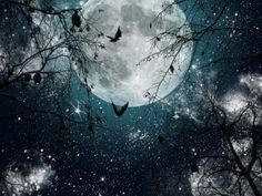 darkness664:    Howl at the full full moon, under the star filled sky, while the bats flap by…