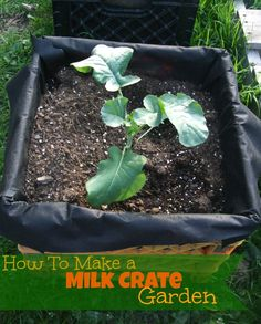 Milk Crate Garden-Great for apartment dwellers!! Take-N-Go Gardening!!