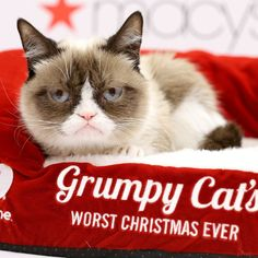 Pin for Later: Peek Into Grumpy Cat's Worst Christmas Ever