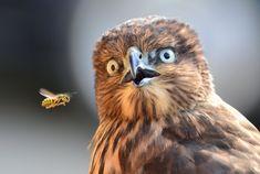 Surprising Fly By  Photography by Elena Murzyn, Woodinville, WA, USA  Photographed at Woodinville, WA, USA