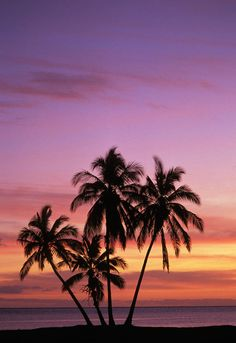 ✮ Hawaii - Molokai, Cluster of palm trees with beautiful sunset background
