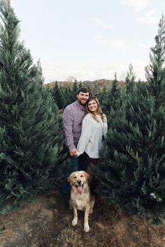 Christmas Tree Farm Engagement Session #ChristmasTreeFarm #EngagementPictures #Tennessee #GoldenRetriever