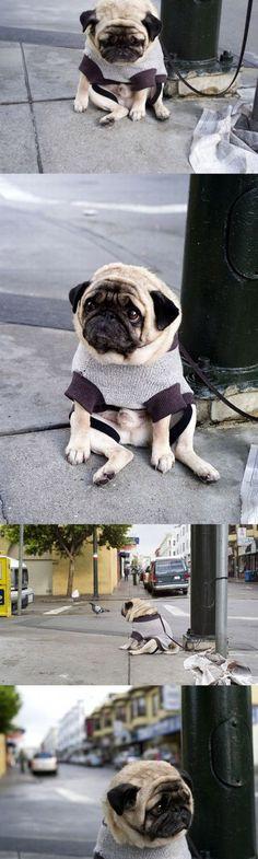 This is actually really sad/but funny cuz its so comical truly.. Poor thing.  His owner's coming back for him @ least. :(