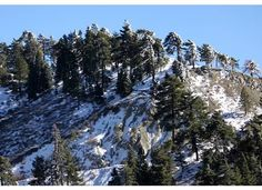 Wrightwood, CA in the winter
