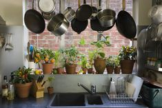 Gardening Composting Indoor kitchen garden growing herbs - Despite the fact that growing herbs indoors is popular, they can be challenging to maintain. Here's some indoor herb garden tips to help you be successful. Growing Tomatoes Indoors, Herbs Indoors, Growing Herbs, Grow Tomatoes, Growing Vegetables, Container Gardening, Gardening Tips, Organic Gardening, Indoor Gardening