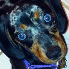 My weenie dog, Nala. <3