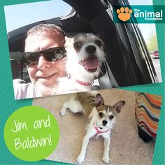 Jim recently adopted Baldwin (A837529) from our PetSmart Charities Everyday Adoption Center, and this little pup has already made himself right at home! He sits right up against his new dad when he's working and follows his every footstep around the house. Two paws up for this pawsome forever family!  If you're in need of a furry friend, visit our two adoption locations today or meet our adoptable pets online at animalfoundation.com!