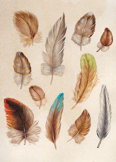 Australian Bird Feathers Print Bird by JenniferEmilyMagno Australian Birds, Australian Artists, Cactus Illustration, Bird Poster, Pastel Background, Bird Artwork, Feather Painting, Bird Prints, Bird Feathers