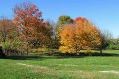 Autumn in Martinsburg WV