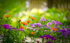 Los cuidados de las plantas en verano - http://www.jardineriaon.com/los-cuidados-de-las-plantas-en-verano.html