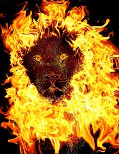 fire artwork | Fire Lion by ~Crescentmoon19 on deviantART
