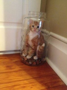 This cat who was trying to steal money and got caught: | 19 Cats Who Made Very Poor Life Choices