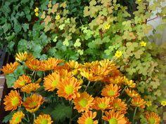 5 perennials that bloom in fall -- www.fiskars.com