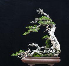 Bonsai Tree by Robert Steven . Indoor Bonsai Tree, Bonsai Plants, Bonsai Garden, Cactus Plants, Ikebana, Bonsai Styles, Decoration Plante, Pot Plante, Miniature Plants