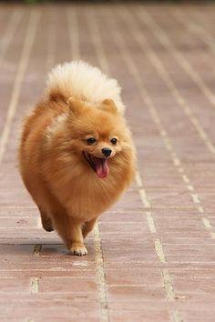 loooks just like my old dog Pooh. I miss her. /: