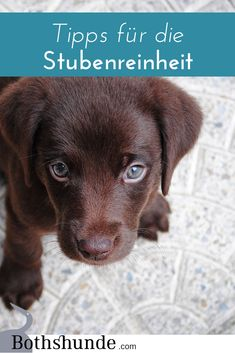 Potty training for the dog - this is how the housebreaking works - Welpen Erziehung - Hunde Best Puppies, Cute Puppies, Dogs And Puppies, Potty Training, Training Your Dog, House Breaking A Puppy, Pet Dogs, Dog Cat, Dog Words