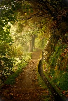 Enchanted forest, Madeira, Portugal
