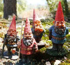 Gnome gang