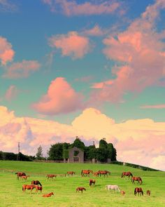 Kilkenny, Ireland. Where else can you see a large amount of horses hanging out on land with no fence in sight!