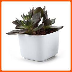 T4U 2 Inch Ceramic White Mini Square succulent Plant Pot/Cactus Plant Pot Flower Pot/Container/Planter - Lets plant (*Amazon Partner-Link)
