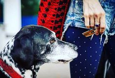 Companion. #love #life #maketheway #neveralone #freelove #giving #sustainability #Berlin #followyourdreams #dogs #walking #achieve Re-post by Hold With Hope