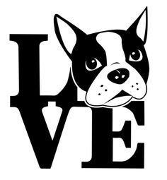 Love and Bostons <3