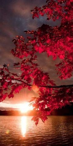 Autumnal sunset