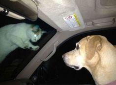 bloglosingrip - fotos engraçadas 14 - Eu não sou o único que tem medo de gatos!