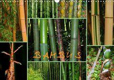 BAMBUS - CALVENDO Kalender von GUGIGEI