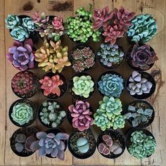 "232 Likes, 6 Comments - Succulent (@succulent_lover_xz) on Instagram: ""Niche ! ➡  Plz Follow us - @succulent_lover_xz For More  . . . . . ✅ Turn Post Notification on …"""