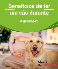 Durante a gravidez, ter um cão pode ser muito benéfico  Ter um #cão durante a #gravidez contribui com uma infinidade de #benefíciosfísicos e #psicológicos para a futura mamãe e também para o bebê. #Conselhos
