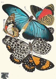 Papillon Morpho, Art Papillon, Botanical Art, Botanical Illustration, Illustration Art, Illustrations, Antique Illustration, Butterfly Illustration, Free Printable Art