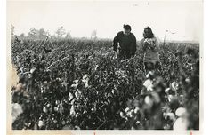 Johnny Cash and June Carter Cash in the cotton fields near Cash's childhood home in Dyess, Arkansas, in the late 1960's