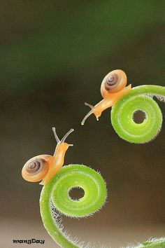 This may be my all-time favorite snail photo. (I need to start a Snail… Nature Animals, Animals And Pets, Cute Animals, Beautiful Bugs, Amazing Nature, Beautiful Creatures, Animals Beautiful, Tier Fotos, All Gods Creatures