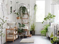 Große Auswahl an Pflanzen für Bäder mit viel Licht