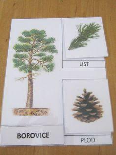 Listnaté a jehličnaté stromy, listy/ jehličí a plody/ šišky.