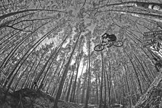 Perspective Thing 1, Bike Life, Mtb, Bicycles, Mountain Biking, Perspective, Camo, Cool Art, Cool Photos