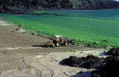 """""""Des faits accablants étouffés depuis des années, et l'absence de moyens mis en place pour enrayer le phénomène, dû à la pollution aux nitrates et à l'azote provenant de l'élevage intensif pratiqué localement.""""...  http://www.telerama.fr/radio/enquete-sur-les-algues-vertes-aux-sources-d-un-tabou-breton,145520.php#cRxzYlQbjHLBcTtC.01"""