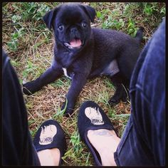 Our Wisdom by Winston Flats are Barnabas-the-pug approved!