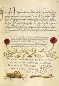Mira Calligraphiae Monumenta.
