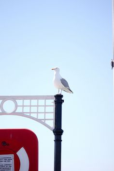 Brighton Pier (I miss everyday waking up in the morning by the noises of seagulls :(